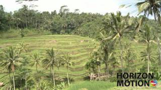 峇里島 梯田 Rice terrace in Bali, Indonesia hm2630000165