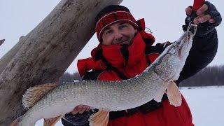 Ловля щуки на раттлины зимой | Рыбалка на щуку | Зимняя рыбалка 2017
