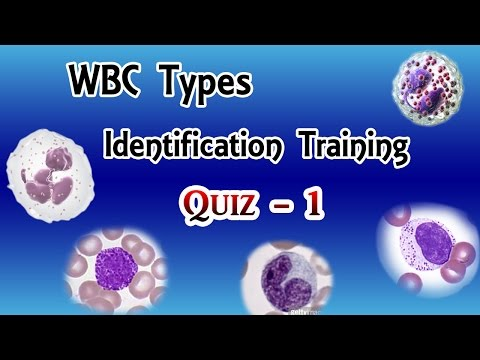 WBC Identification Training  Quiz  ( Part 1/3 )