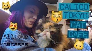 Video CALICO CAT CAFE    SHINJUKU, TOKYO! Day 1 Part 2. JAPAN! download MP3, 3GP, MP4, WEBM, AVI, FLV April 2018