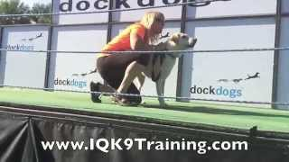 Iq K9 Training | Oceanside Dock Diving Labrador Retriever, 'dooley' And Lianne Shinton