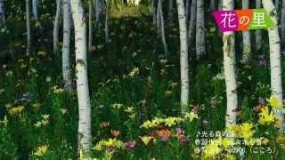 富士見高原花の里観光天使「co906.」による花の里ライトアップののテー...
