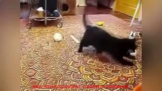 приколы про животных самые смешные видео бесплатно