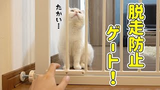 I put a breakout prevention gate for my cat.