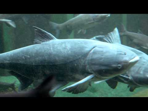 The High Stakes Of The Great Lakes - Invasive Species