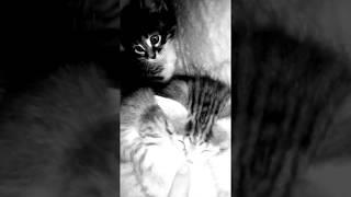 Мои любимые котята 😺😺😺