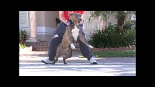Dvd- The Art Of Fixing Dog Aggression With The Master (coming 2014)