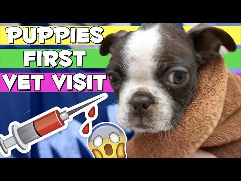 Puppy gets his first Needle Shots | Zuko's First Vet Trip