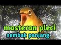 Masteran Pleci Nembak Panjang  Mp3 - Mp4 Download