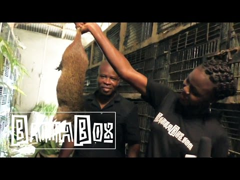 Nigerian Food: how to eat Giant Rat meat