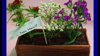Blumentopf Torte zum Muttertag - Last Minute Muttertagstorte mit echten Blumen - Kuchenfee