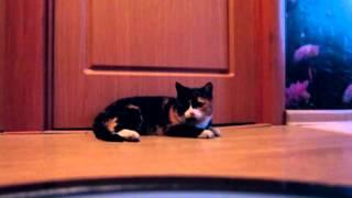 Реакция кошки на робот-пылесос :)