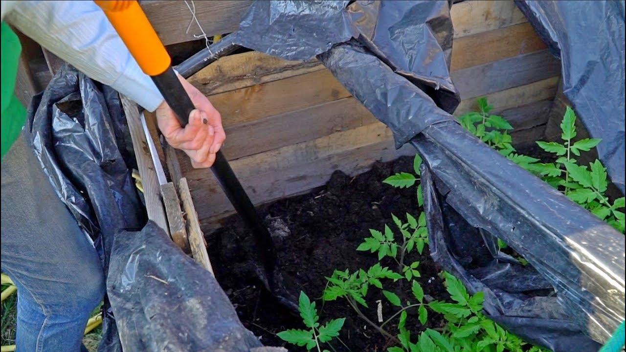 Осенняя подкормка плодовых деревьев.?? Органические удобрения для сада.
