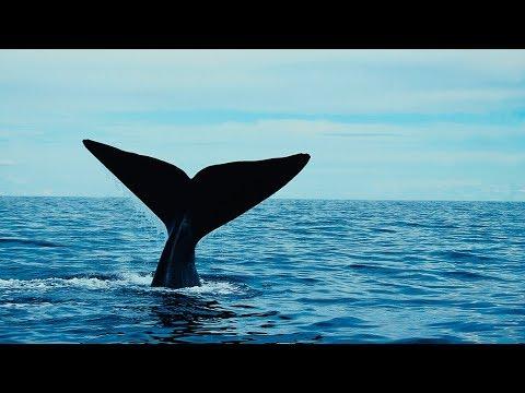Grandes documentales - El gigante del Ártico