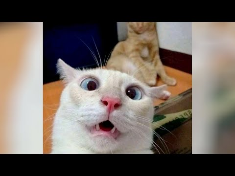😂 FUNNIEST CAT SITUATIONS 😹 100 MILLION PEOPLE MUST SEE THIS!