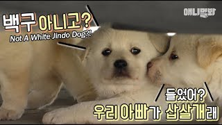 아침드라마-하나-가져왔습니다-ㅣ-what-if-puppies-don-t-look-alike-their-dad-at-all