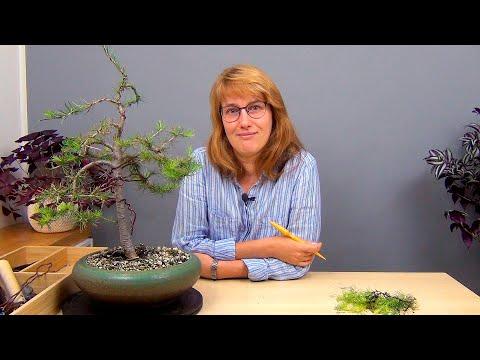Вопрос: Где растут такие деревья, почему они такие, что с ними?