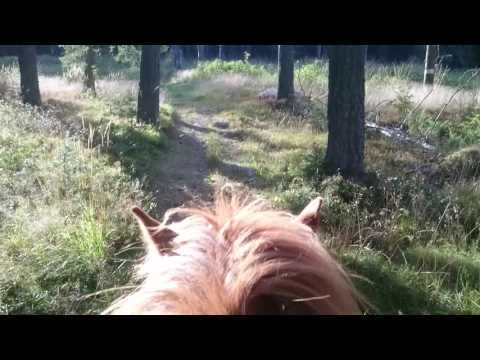 Riding through a beautiful forest of Hälsingland