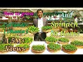 How you can grow Coriander ( Dhania ) and Spinach ( Palak ) Easily at Home.