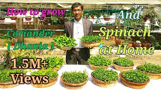How you can grow Coriander ( Dhania ) and Spinach ( Palak ) Easily at Home. thumbnail