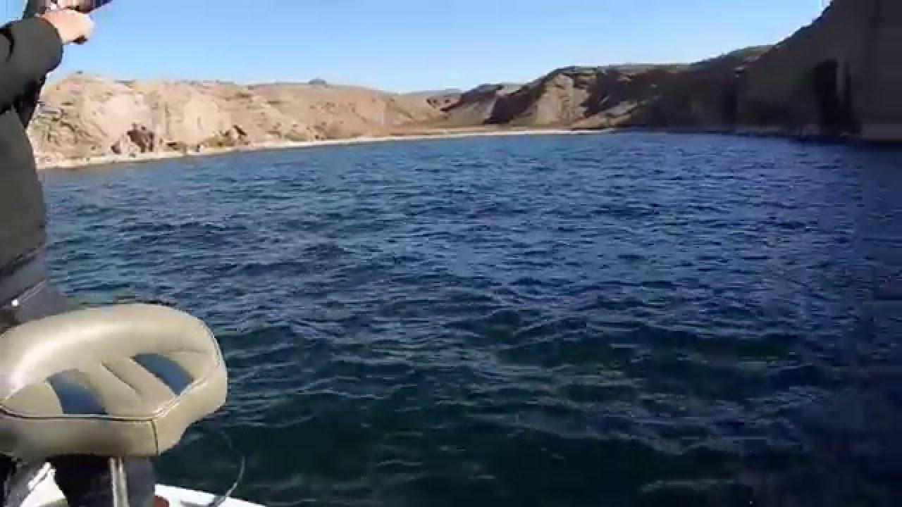 Lake mohave striper fishing 2015 youtube for Lake mohave fishing