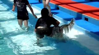 山中湖Woofにてはやての水泳訓練を実施.