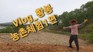황봉TV_VLOG_농촌체험1편_ 두부맛집 방문기!