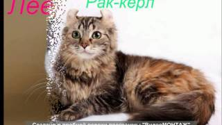 Какая порода кошек тебе подходит по знаку зодиака?