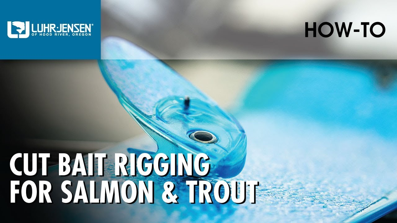 Luhr jensen cut bait rigging for salmon trout luhr for Salmon fishing tackle tips and techniques