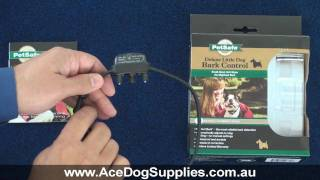Bark Collar Review - Petsafe Little Dog Nano No Bark Collar