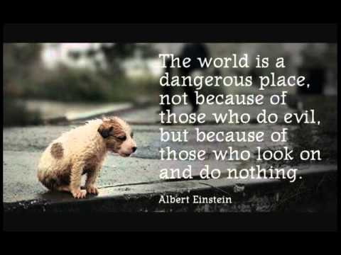 Animal Cruelty Quotes Alluring Stop The Animal Abuse Quotes  Youtube