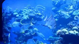 Mallorca aquarium