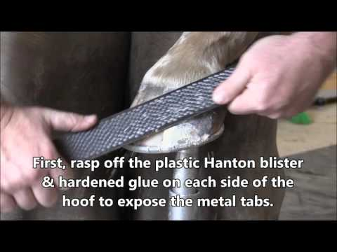 How to Easily Remove Hanton Glue-On Horseshoes