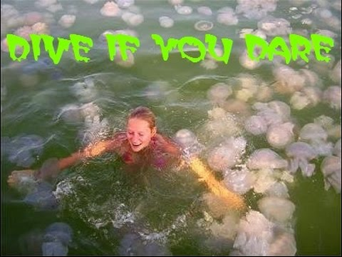 Jellyfish Horror - Dive If You Dare