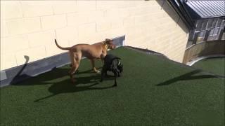 Dogs Trust Manchester - Gerri