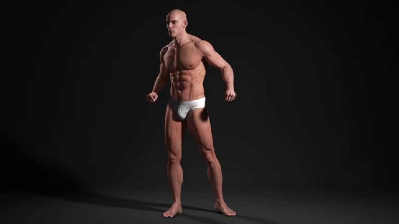 3D Male Body - Anatomy Study (Look Around) | Andor Kollar ...