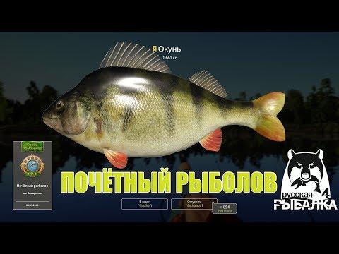 Почётный рыболов Комариного - трофейный окунь