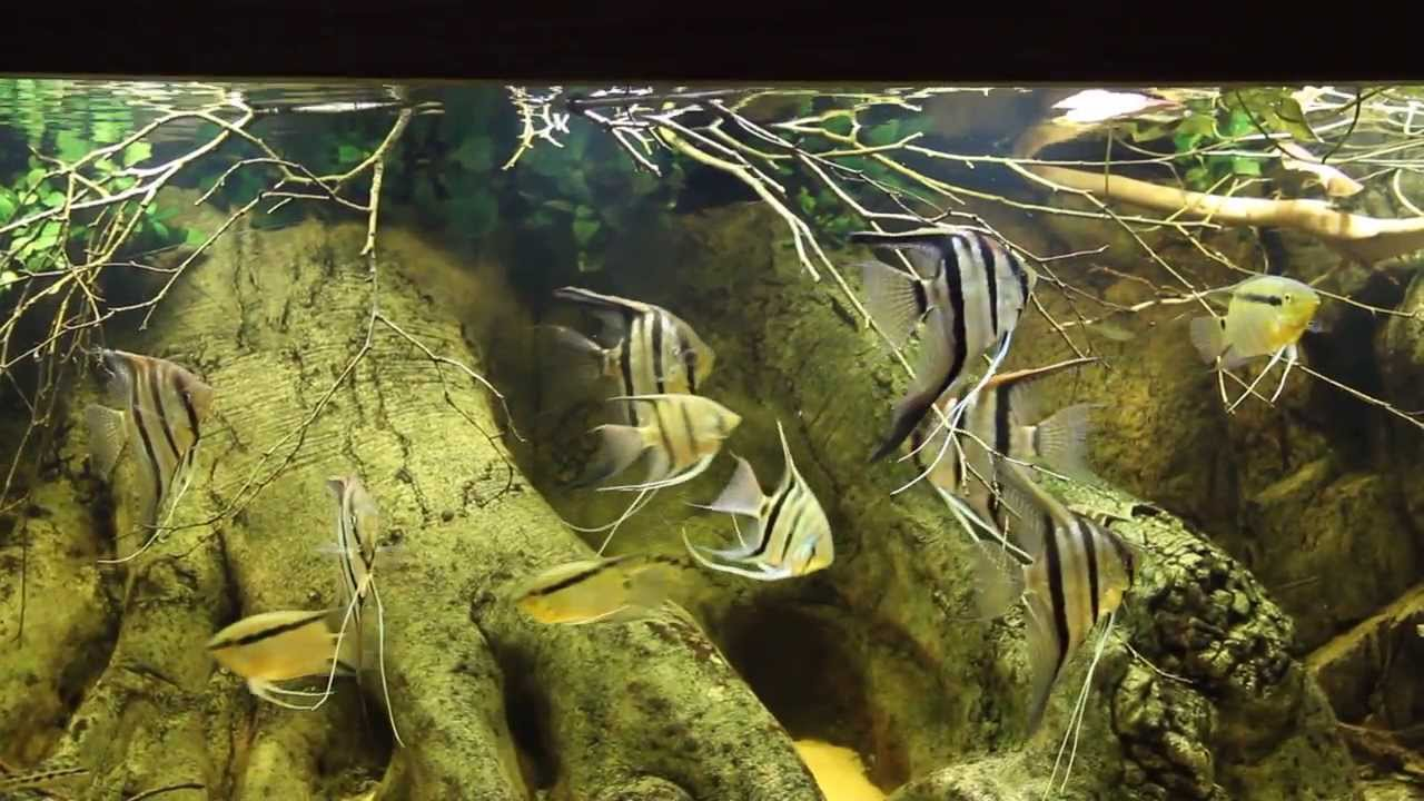 Amazon Aquariums : Amazon Community Aquarium - YouTube