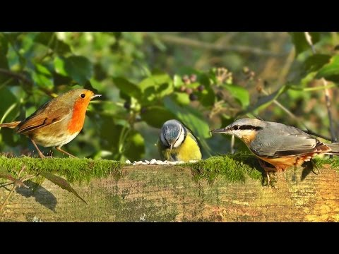 Videos of Birds for Cats, Dogs & Humans to Watch - Little Birds Everywhere