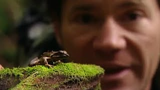 Yakushima Island Frogs - Secret Wilderness: Japan - BBC thumbnail