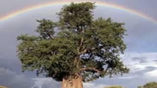 Kamarius - Rainbow of Life