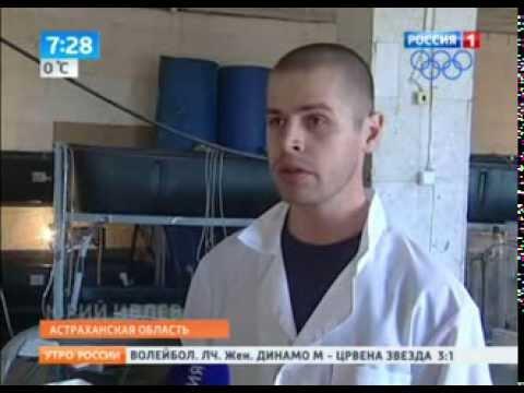 Живая рыба, раки и креветки в Пушкино! Огромный выбор! - YouTube