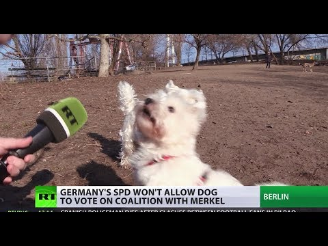 Meanwhile in Germany: SPD won't allow dog to vote on coalition with Merkel