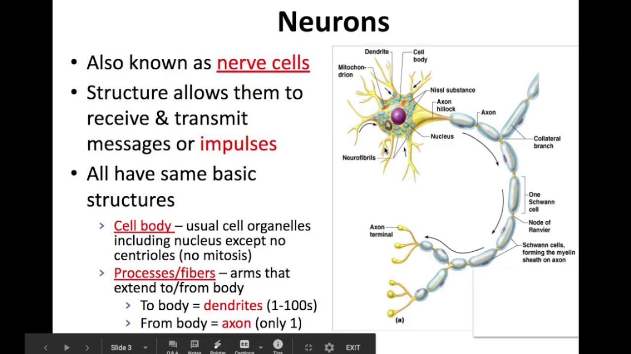 Class 10 Science | Control & Coordination | Nervous System