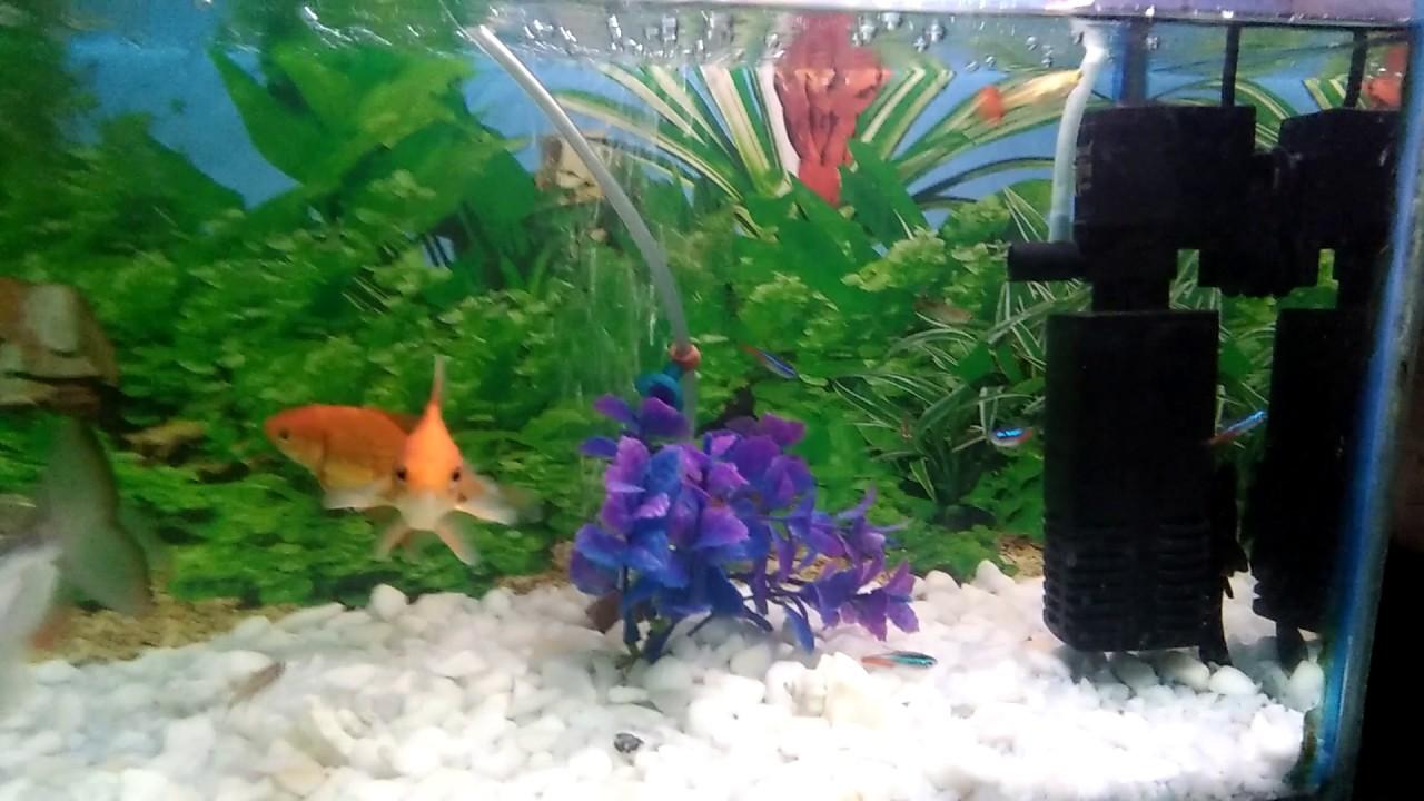 tank white bottom Fish on