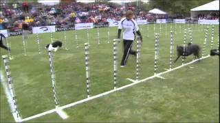 Dog-style Olympics take the biscuit
