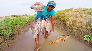 La Pesca De Tilapias a Mano