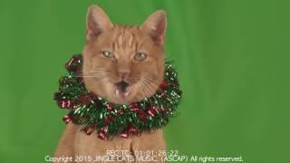 Новогодняя песня котов