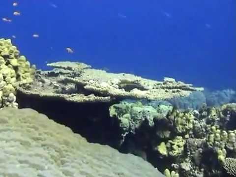 Red Sea Breathtaking Marine Life.FLV