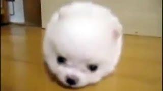 Смешное видео про животных  19